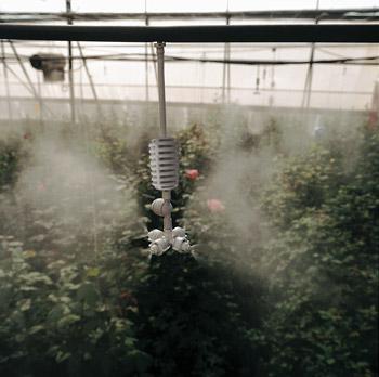 Ứng dụng đầu tưới phun sương xòe