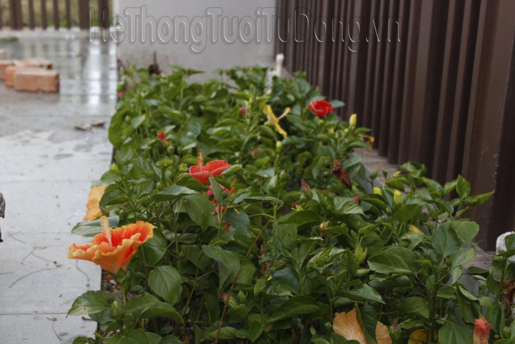tưới bồn hoa tự động