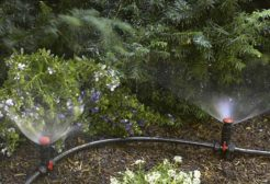 Cách lắp đặt hệ thống tưới phun mưa