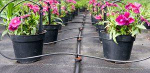 Hệ thống tưới nhỏ giọt cho hoa