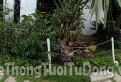 Lắp hệ thống tưới quận Bình Tân – Khách Hàng An Nông