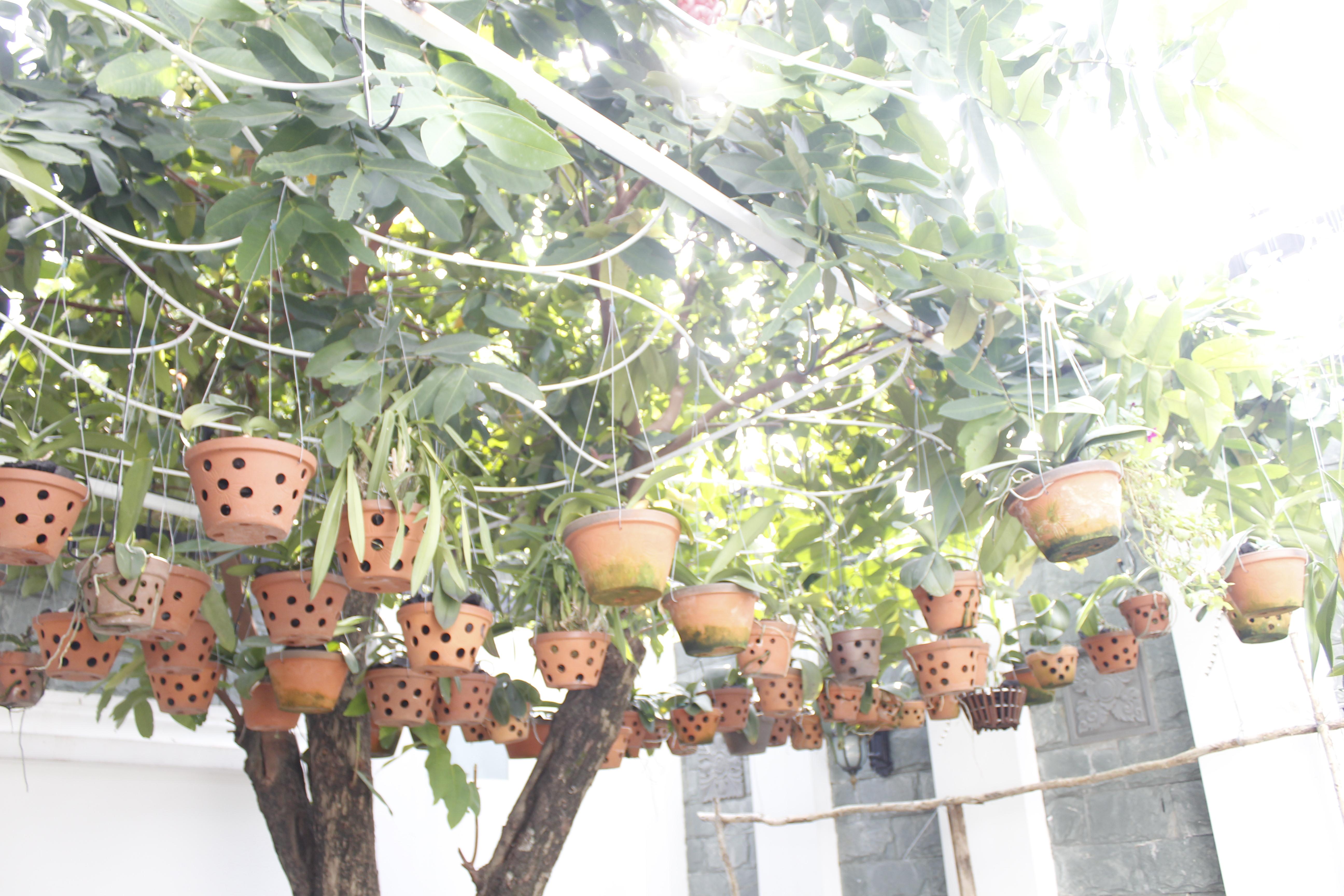tưới vườn lan nhà anh Nam quận 7