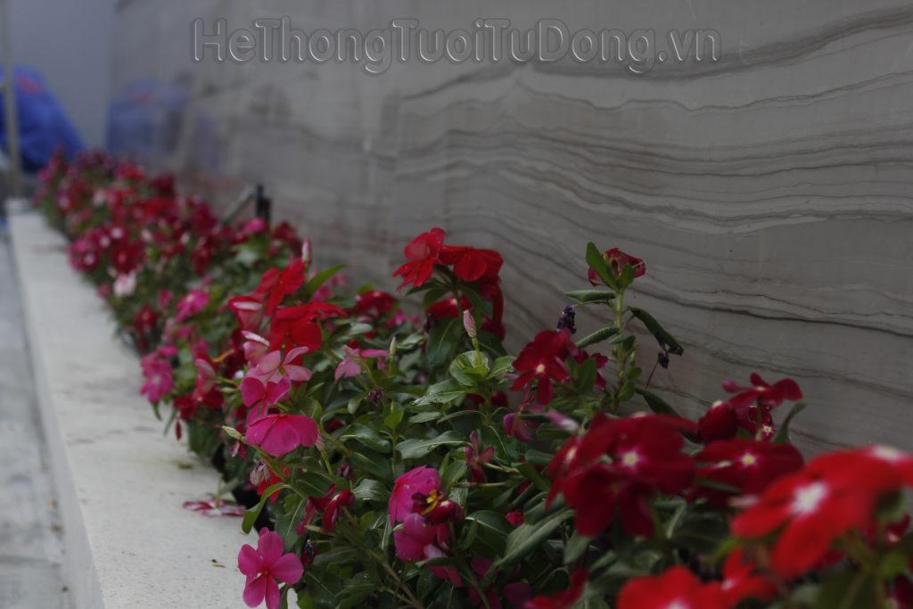 tưới hoa tự động