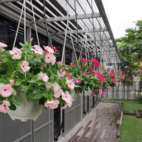 Dự án tưới tự động cho khu vườn anh Quang – Quận 9