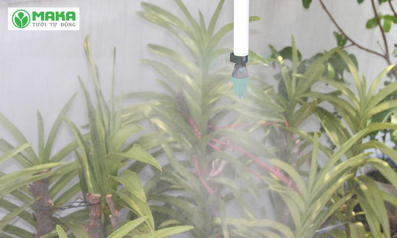 Sử dụng béc tưới phun sương cho vườn lan